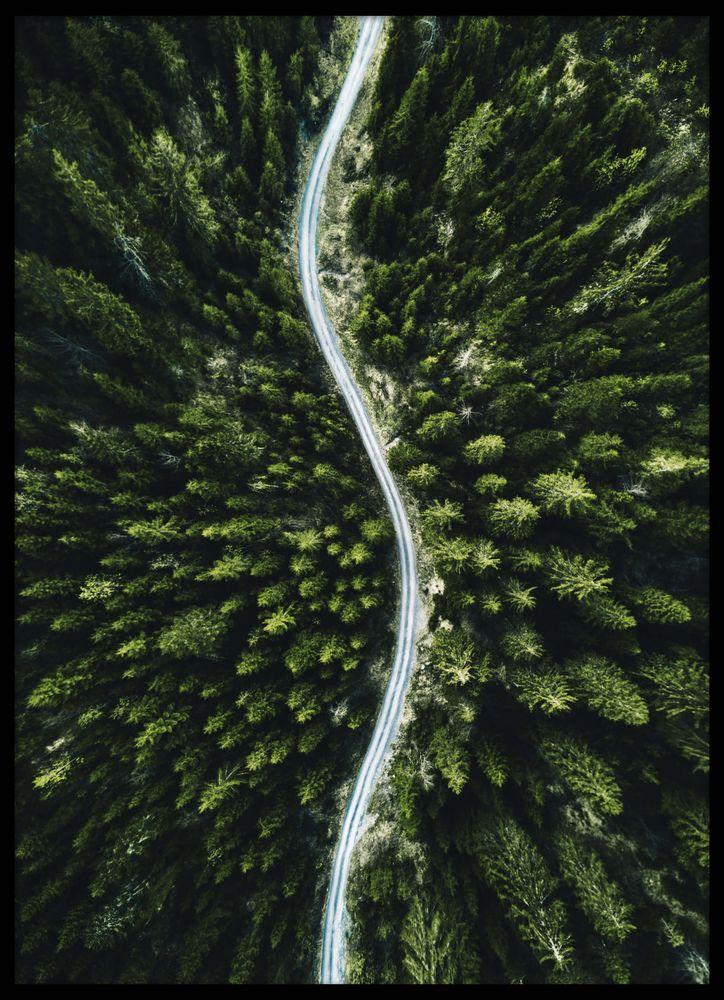 Skog Nordamerika Poster