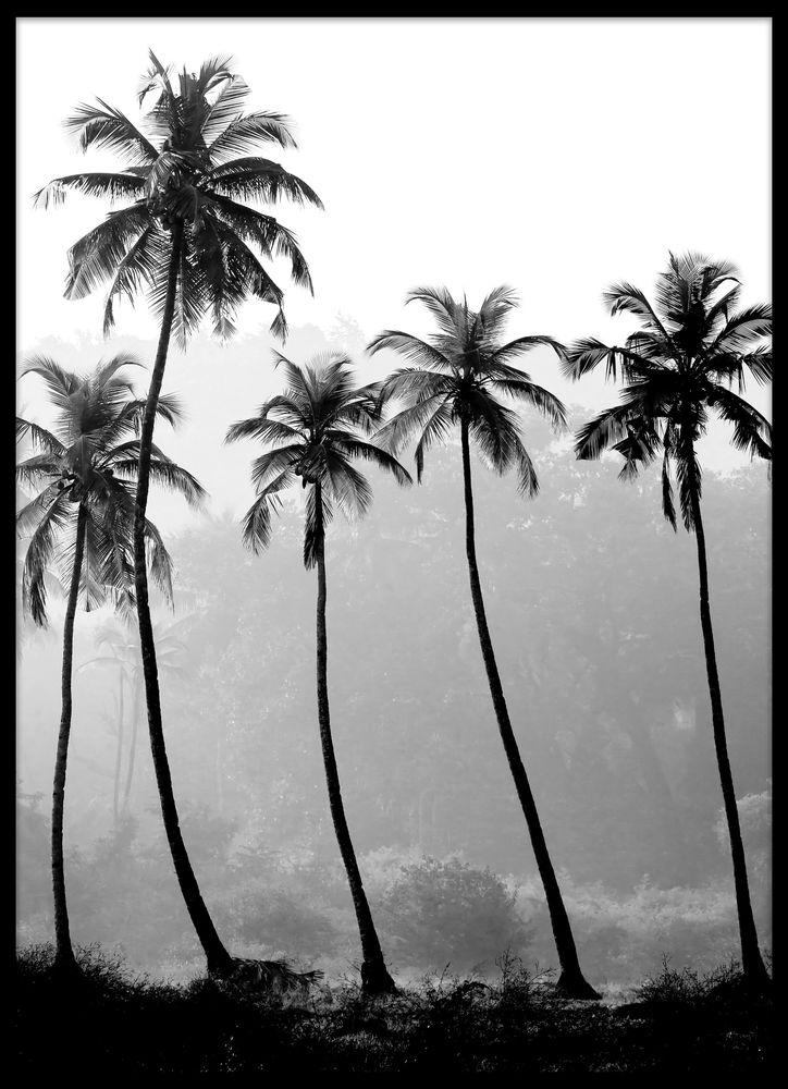 Palmträd siluett poster