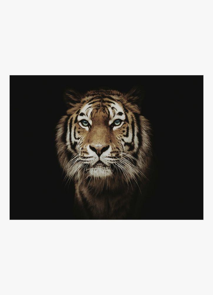 Tiger närbild poster