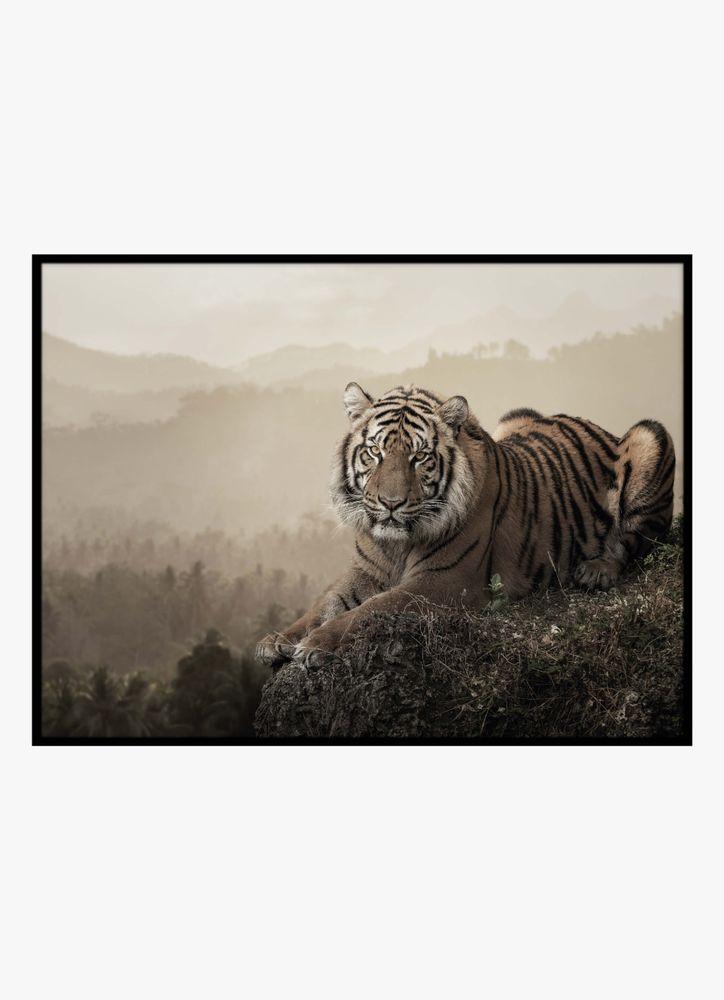 Tiger vilar poster