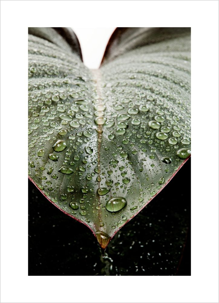 Fuktigt blad poster
