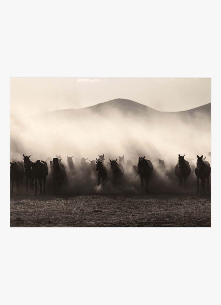 Vilda hästar poster